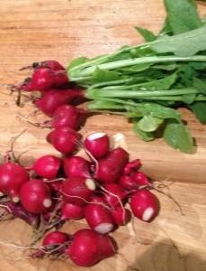 The radish harvest