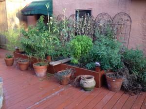 Garden on 10/10/14