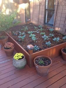 Garden on 10/16/14